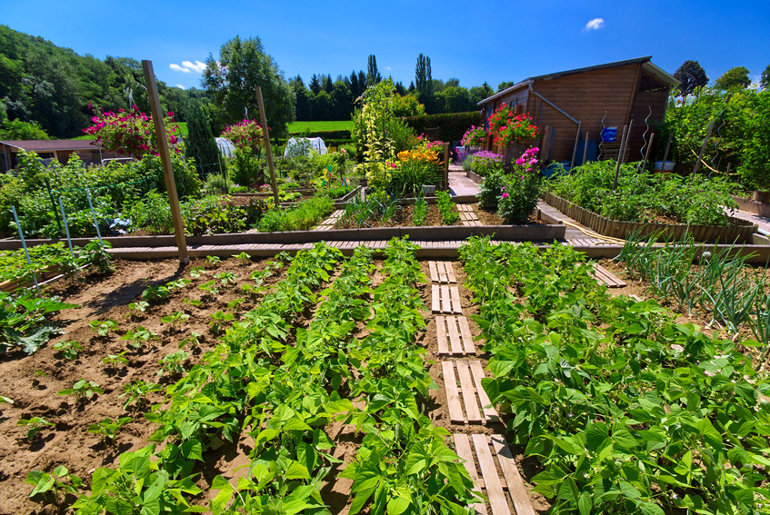 Blog jardin